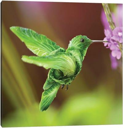 Humming Cabbage Bird Canvas Art Print
