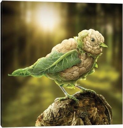 Cauliflower Chickadee Canvas Art Print