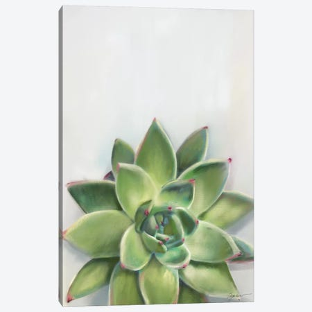 Succulent Green Canvas Print #SPW287} by Mary Sparrow Art Print