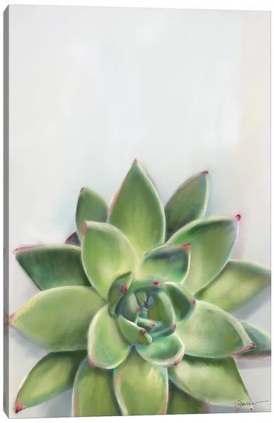 Succulent Green Canvas Art Print