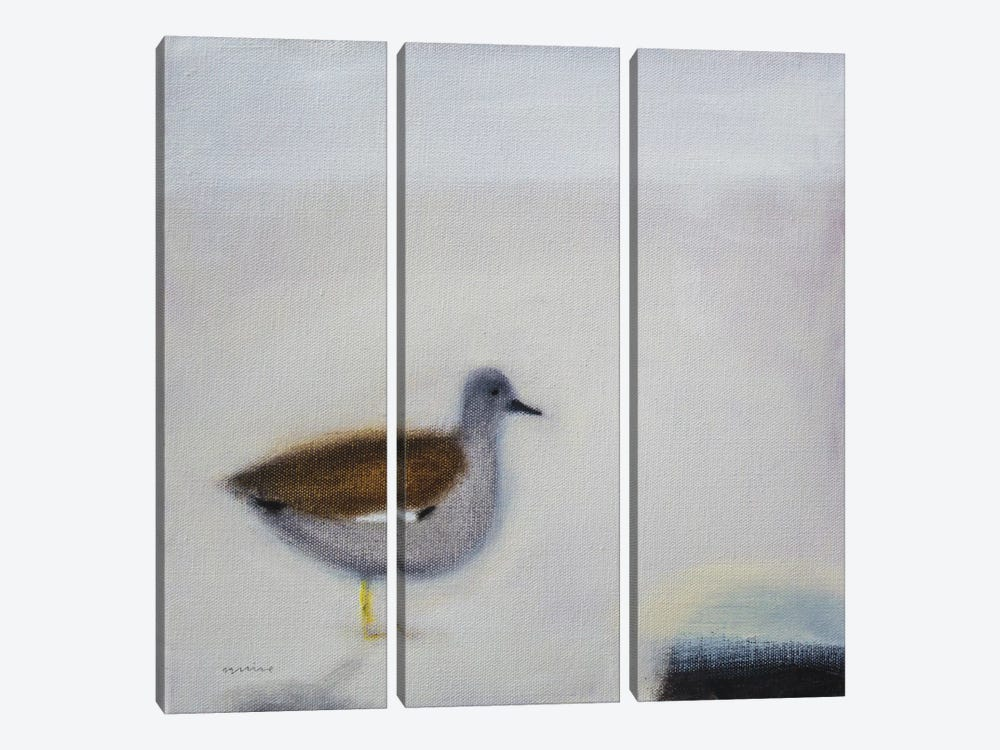 Gadwall by Andrew Squire 3-piece Canvas Art