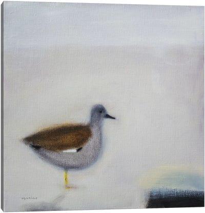 Gadwall Canvas Art Print