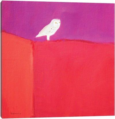Owl Canvas Print #SQU16
