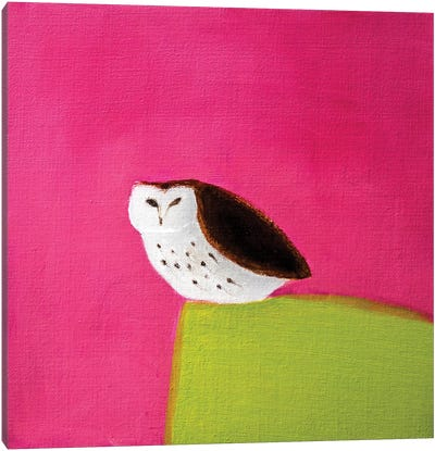 Owl On Pink & Green Canvas Print #SQU19