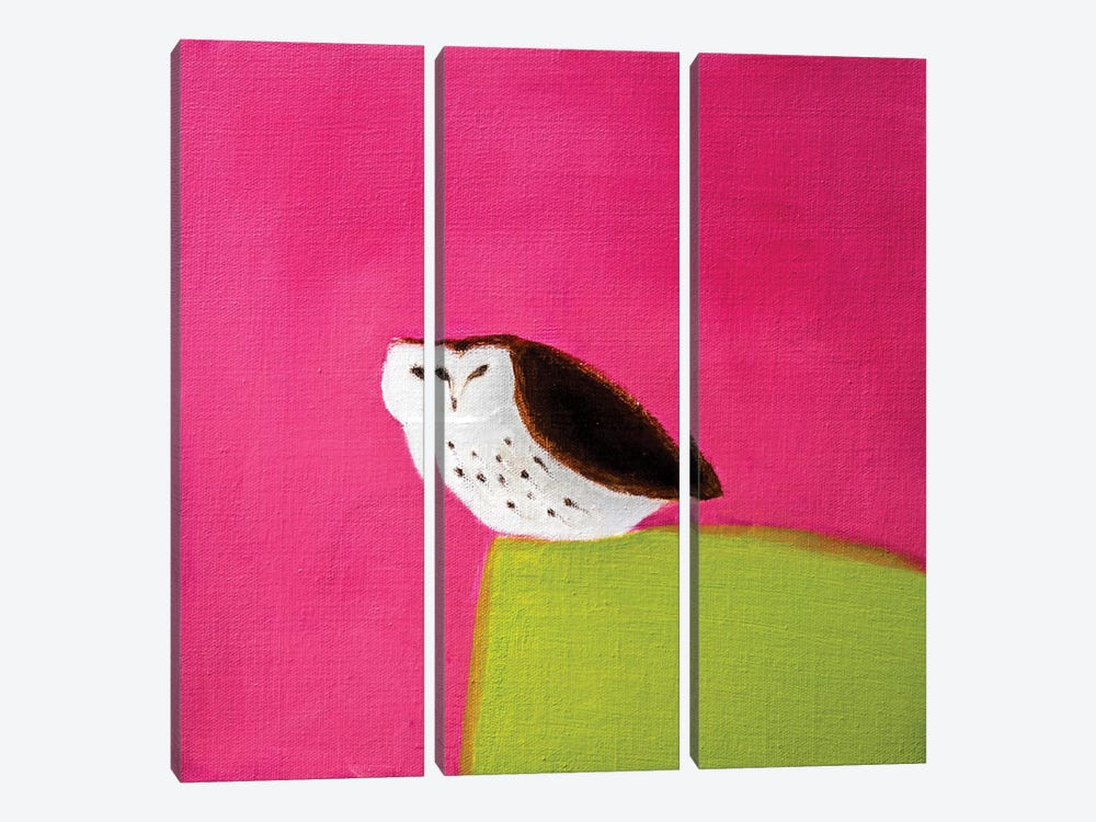 Owl On Pink & Green by Andrew Squire 3-piece Art Print