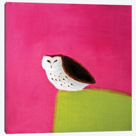 Owl On Pink & Green Canvas Print #SQU19} by Andrew Squire Canvas Print