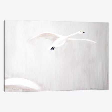 Bewick's Swan Canvas Print #SQU3} by Andrew Squire Canvas Print