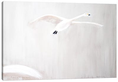 Bewick's Swan Canvas Art Print