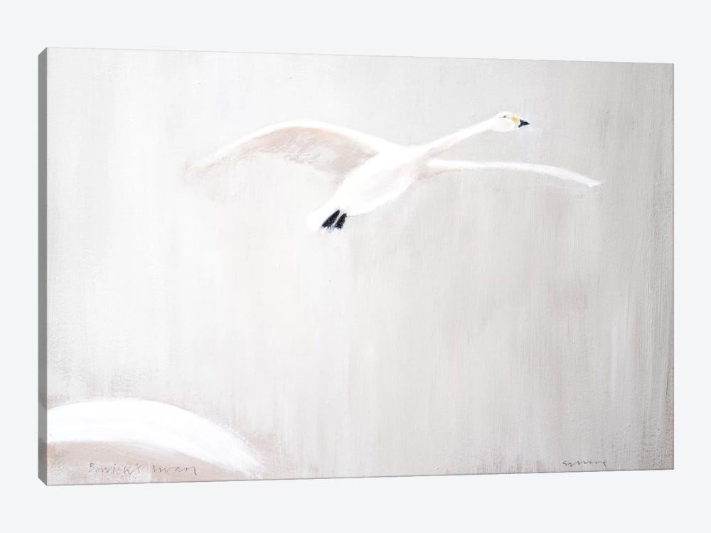 Bewick's Swan by Andrew Squire 1-piece Art Print