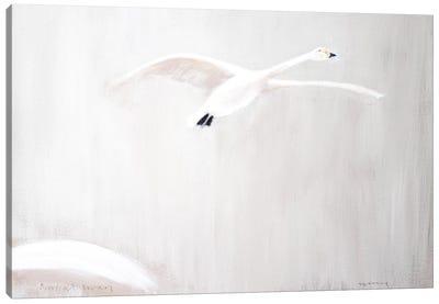 Bewick's Swan Canvas Art Print