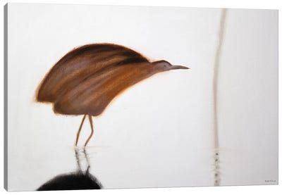 Bittern Canvas Art Print