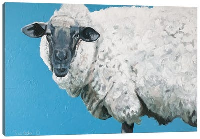 Wooly Sheep Canvas Art Print
