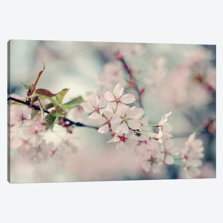 A Branch Of Beauty Canvas Print #SRH1} by Sarah Gardner Canvas Art