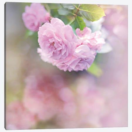 Graceful Floral Canvas Print #SRH21} by Sarah Gardner Canvas Art Print