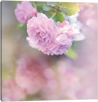 Graceful Floral Canvas Art Print