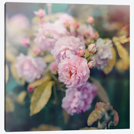 Season Of Blossoms Canvas Print #SRH37} by Sarah Gardner Canvas Print