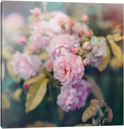 Season Of Blossoms Canvas Art Print