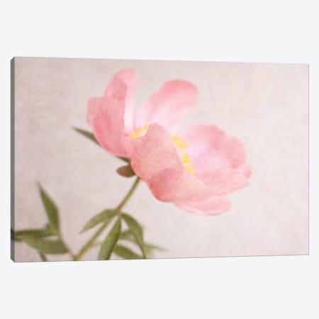 Soft Petals Canvas Print #SRH39} by Sarah Gardner Canvas Artwork