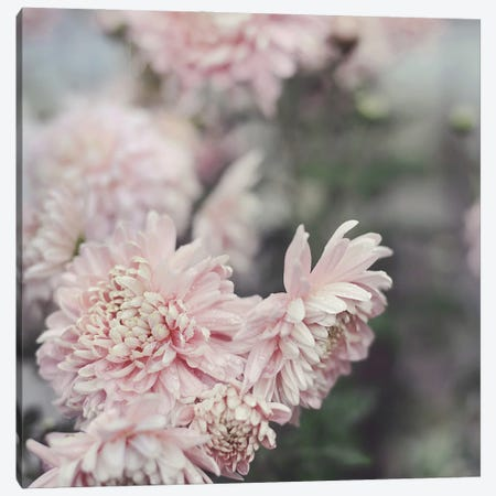 Evening Blooms Canvas Print #SRH49} by Sarah Gardner Art Print