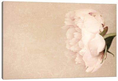 Alluring Flower Canvas Art Print