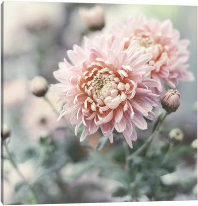 Muted Daisy Canvas Art Print
