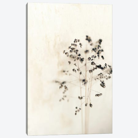 Muted Dried Branch Canvas Print #SRH70} by Sarah Gardner Canvas Wall Art
