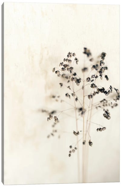 Muted Dried Branch Canvas Art Print