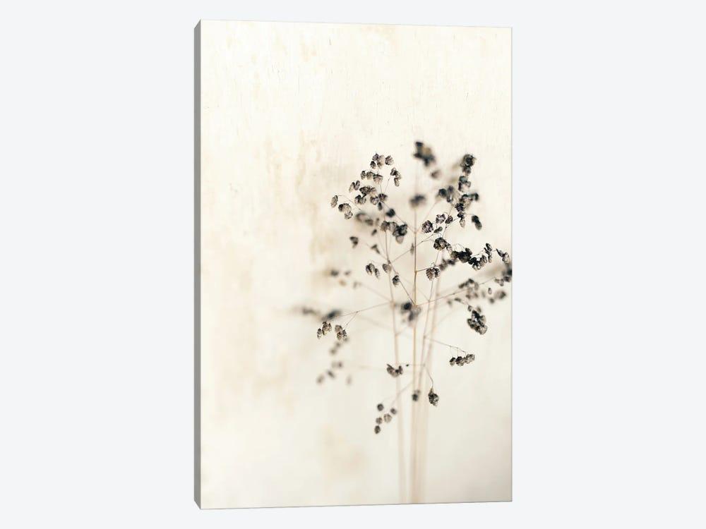 Muted Dried Branch by Sarah Gardner 1-piece Canvas Artwork