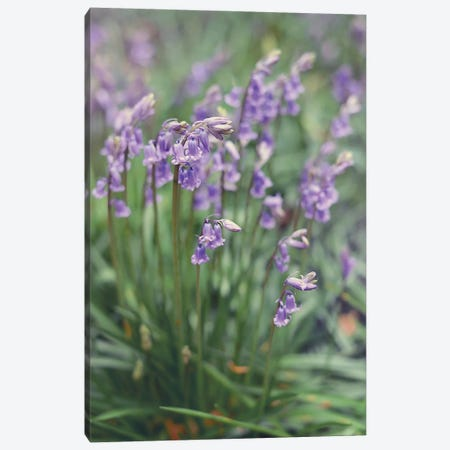 Spring Flowers Canvas Print #SRJ5} by Sarah Jane Canvas Art Print