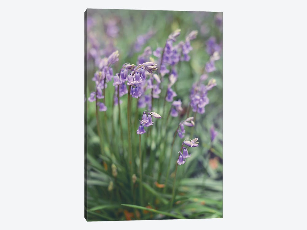 Spring Flowers by Sarah Jane 1-piece Canvas Wall Art