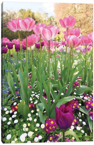 Spring Garden Canvas Art Print
