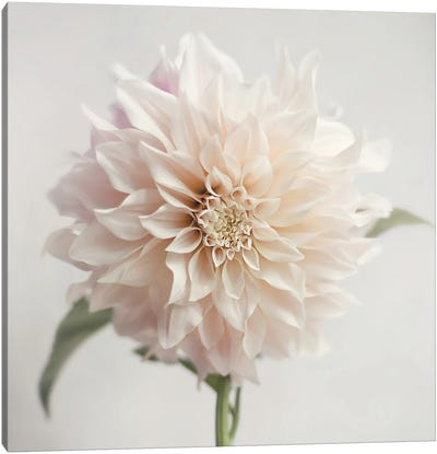 White Bloom From The Garden Canvas Art Print
