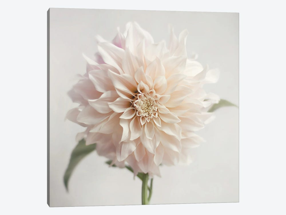White Bloom From The Garden by Sarah Jane 1-piece Canvas Artwork