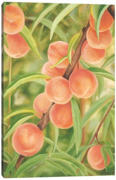 Peach Perfect Canvas Art Print