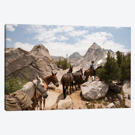 A Horse And Rider Lead A String Of Pack Animals In King's Canyon National Park, California Canvas Print #SRR109} by Joel Sartore Art Print