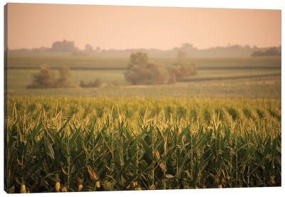 A Non-Irrigated Field Of Corn Near Bennet, Nebraska Canvas Art Print