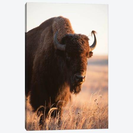 A Portrait Of A Bison On A Ranch Near Valentine, Nebraska II Canvas Print #SRR154} by Joel Sartore Art Print