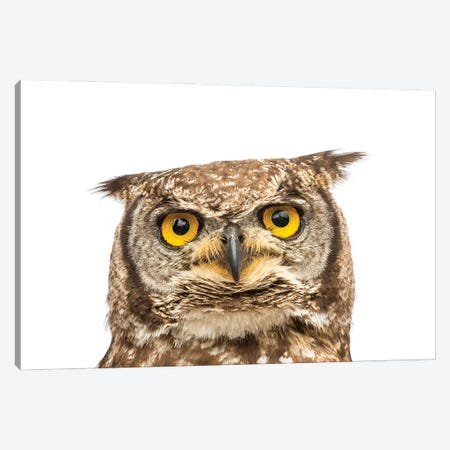 A Spotted Eagle Owl From Plzen Zoo In The Czech Republic Canvas Print #SRR181} by Joel Sartore Canvas Art Print
