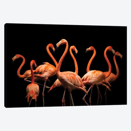 American Flamingos At The Lincoln Children's Zoo Canvas Print #SRR218} by Joel Sartore Canvas Art Print