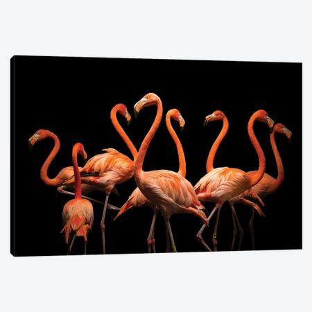 American Flamingos At The Lincoln Children's Zoo Canvas Print #SRR218} by Joel Sartore Canvas Art Print