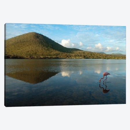 An American Flamingo On Floreana Island In Galapagos National Park Canvas Print #SRR223} by Joel Sartore Canvas Art