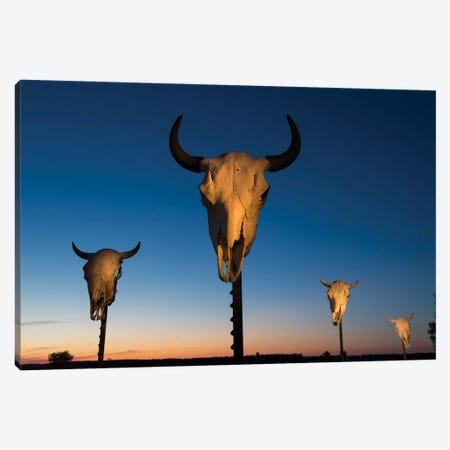 Four Bison Skulls On Posts At Dusk Canvas Print #SRR279} by Joel Sartore Art Print