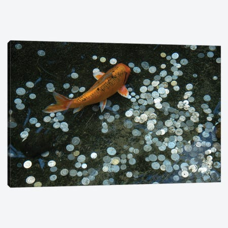 Koi With Coins In A Display At The Taronga Zoo Canvas Print #SRR291} by Joel Sartore Canvas Print