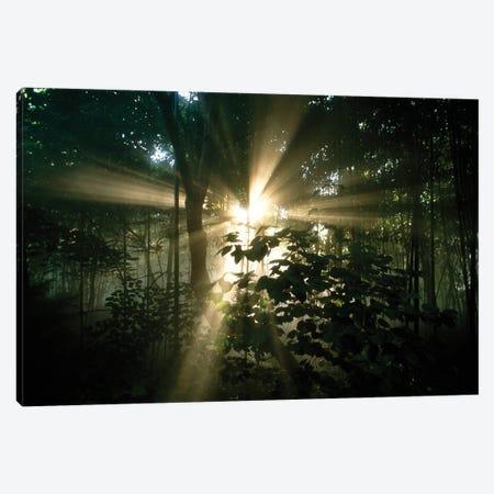 Rays Of Sunlight Filter Through Trees In Cincinnati, Ohio Canvas Print #SRR309} by Joel Sartore Canvas Print