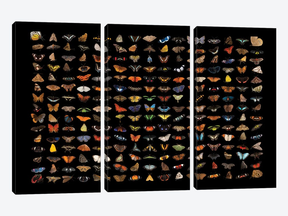 A Composite Of 225 Butterfly And Moth Species by Joel Sartore 3-piece Canvas Artwork
