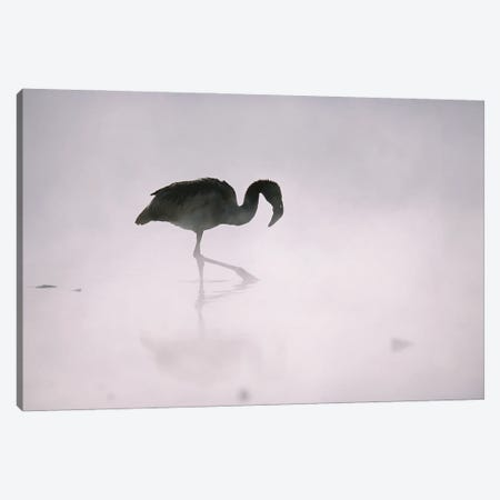 A Flamingo Wades In A Thermal Hot Spring In Chile's Atacama Desert Canvas Print #SRR78} by Joel Sartore Canvas Art