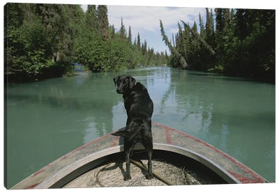 A Black Labrador Dog Travels Up The Kenai River On A Boat's Bow I Canvas Art Print