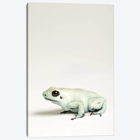 A Golden Poison Dart Frog At Rolling Hills Zoo Canvas Print #SRR91} by Joel Sartore Canvas Wall Art