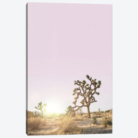 Joshua Tree Sunset Canvas Print #SSE100} by Sisi & Seb Art Print