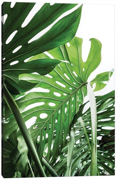 Jungle Canvas Art Print